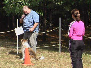 Tazley, a Shetland Sheepdog, practicing in the obedience ring